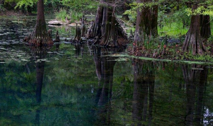 spring, florida, state park