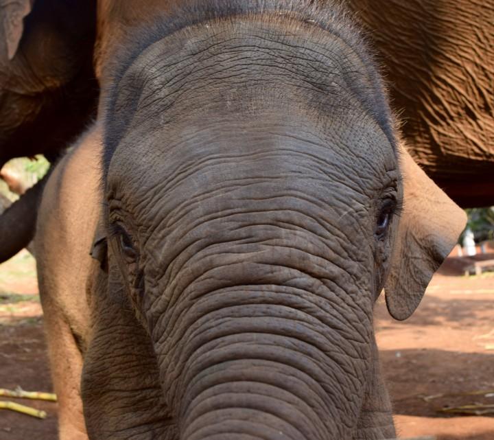 hong kong, elephant, travel
