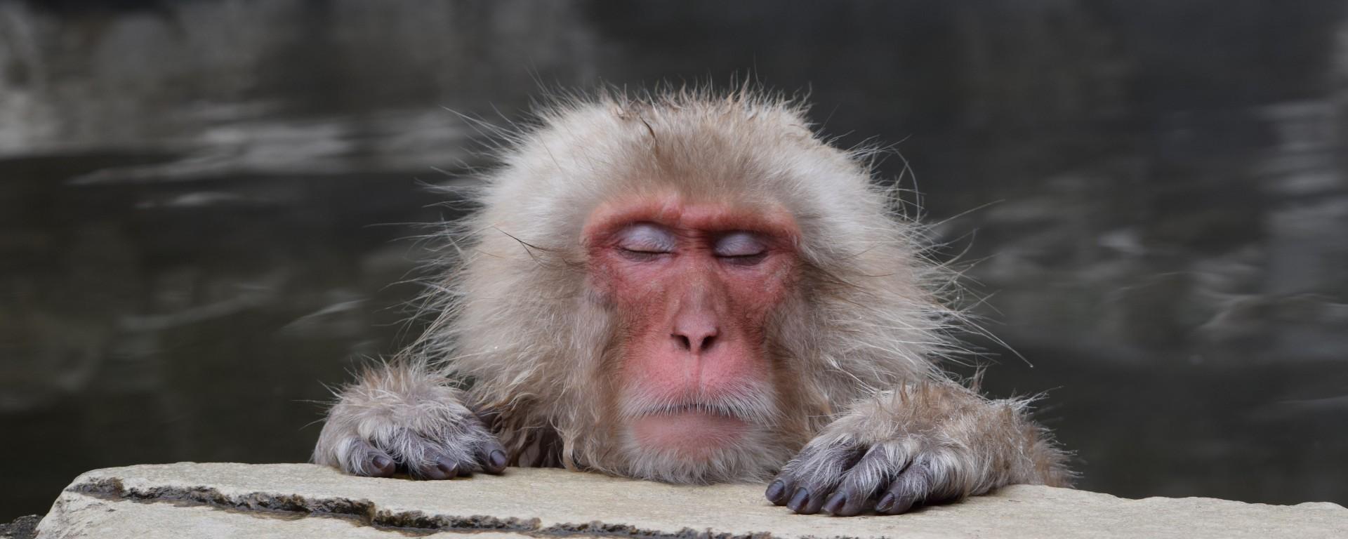 baboon, hong kong, travel