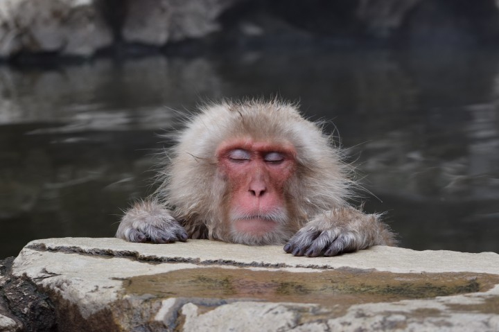 baboon, hong kong, travel