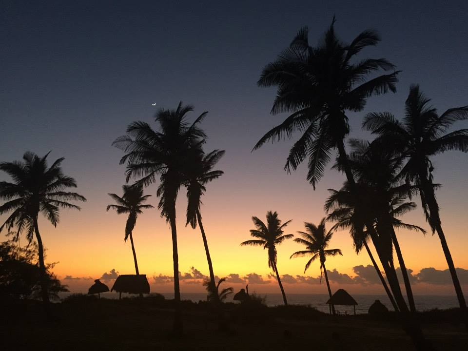mozambique, travel, palm trees, tropical