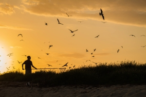 florida, birds, bird banding, terns, dry tortugas, florida