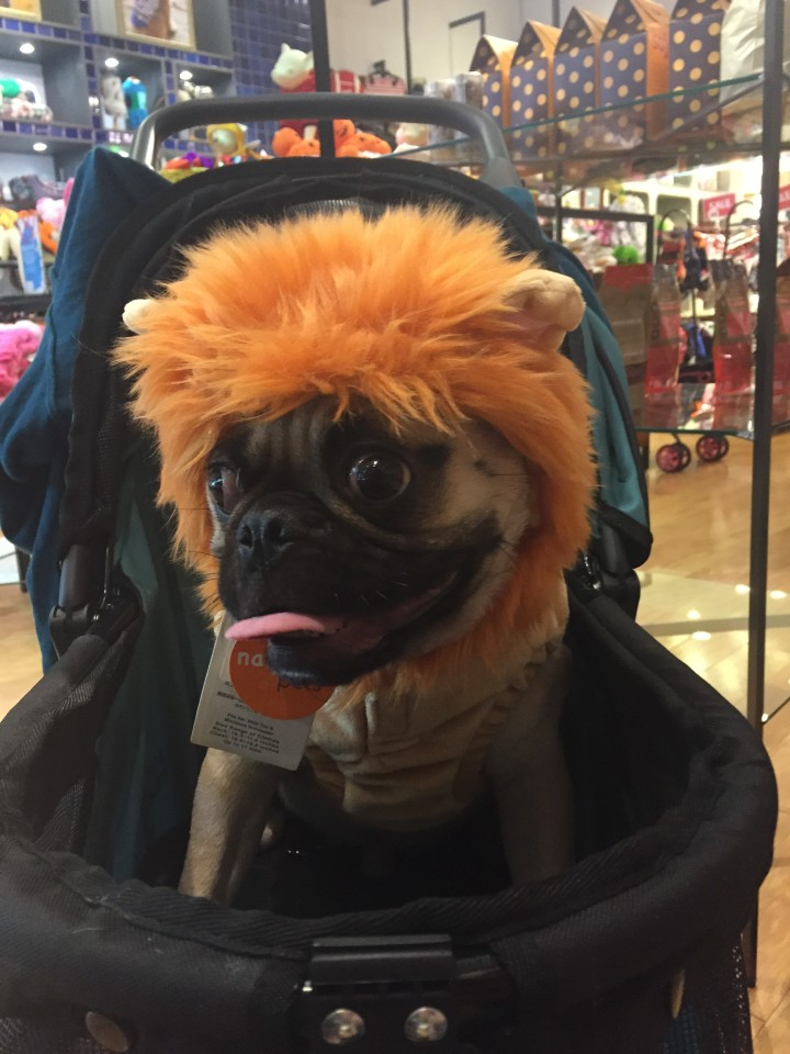dog, halloween, new york city