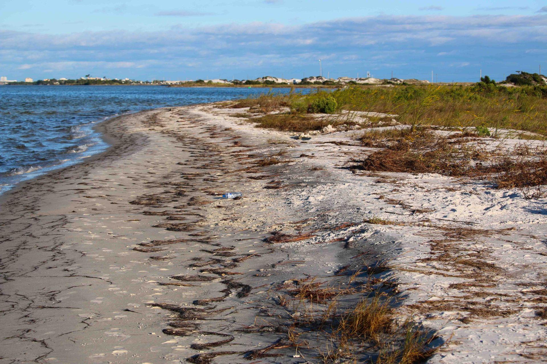 florida, coast, gulf, bay, travel, nature
