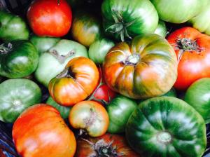 romania, tomatoes, garden