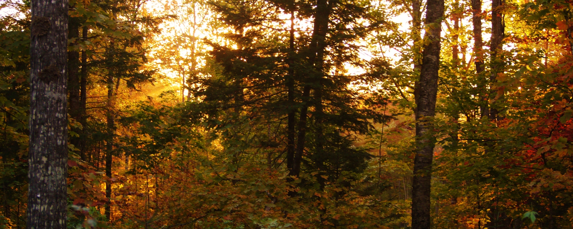 maine, fall, forest, foliage