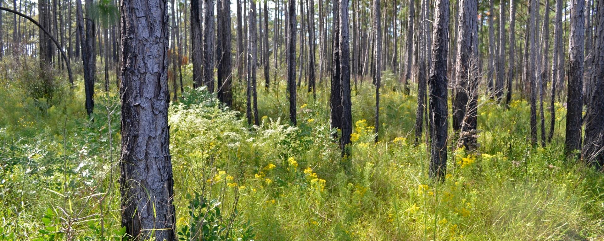 karick lake, florida, wildflowers, fall fores, travel