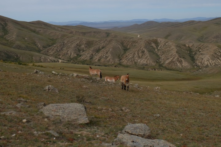 mongolia, horses, travel, explore
