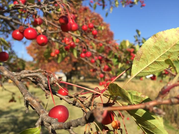 ohio, autumn, fall, travel, explore