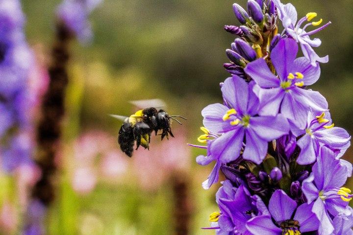 Bee Midair