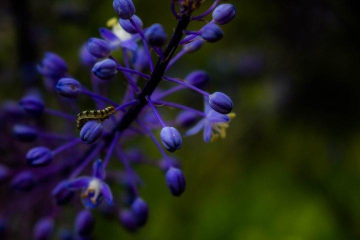 Little Caterpillar Purple Flower