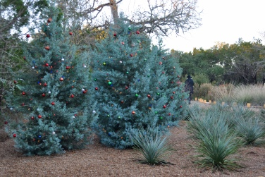 Decorated Arizona cypress tree