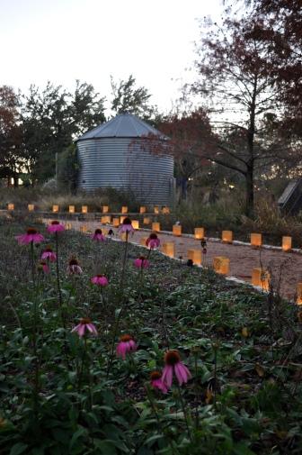 Rain barrel and purple cone flowers