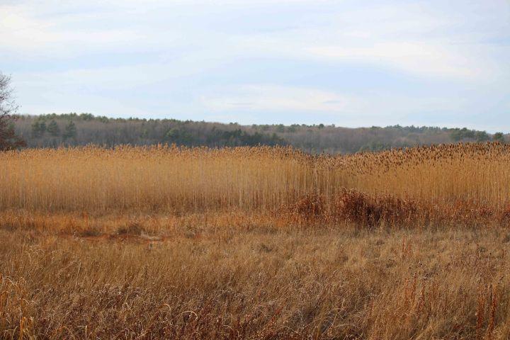 OptOutside in Maine, maine, audubon, gilsland farm