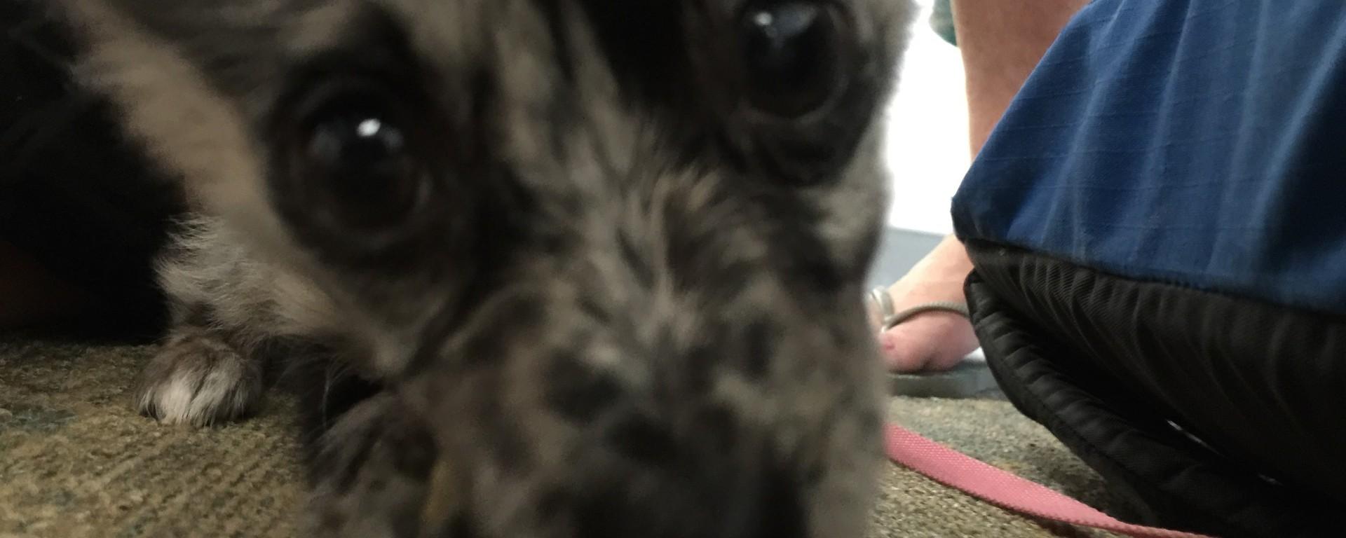 puppy, dog, travel