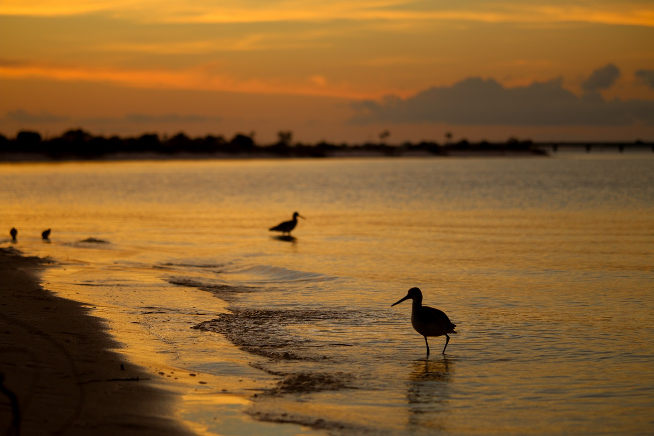navarre, florida, panhandle, sunset, birding