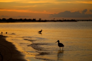 navarre, florida, panhandle, sunset, birding