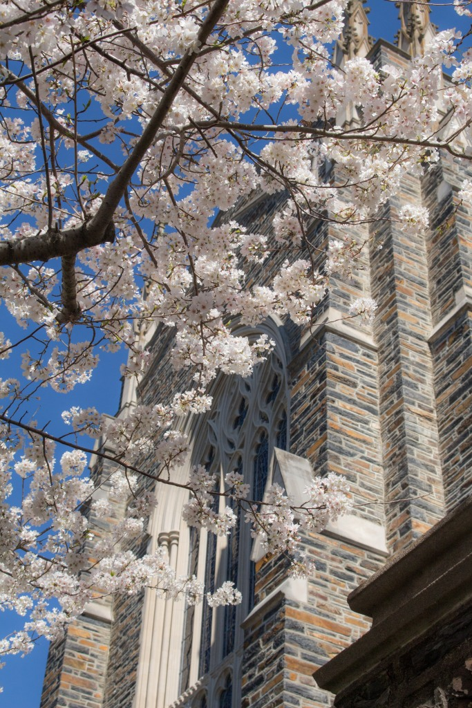 I took this photo of the Duke Chapel back in the spring time, when the cherry blossoms were blooming and it was warmer and sunnier. I love this photo for two reasons, 1) it helps me get through the cold winter by reminding me spring is just around the corner, and 2) it's a great example that you really can find beautiful scenery anywhere, even just outside your office.