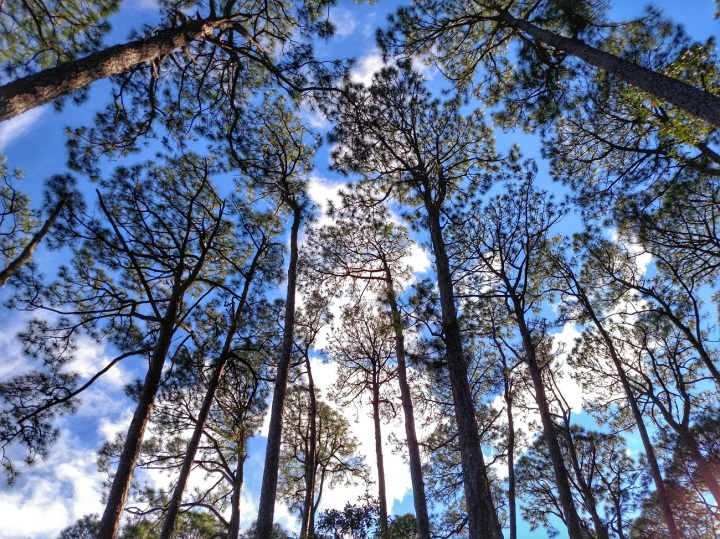 oak tree, nature park, florida, nature
