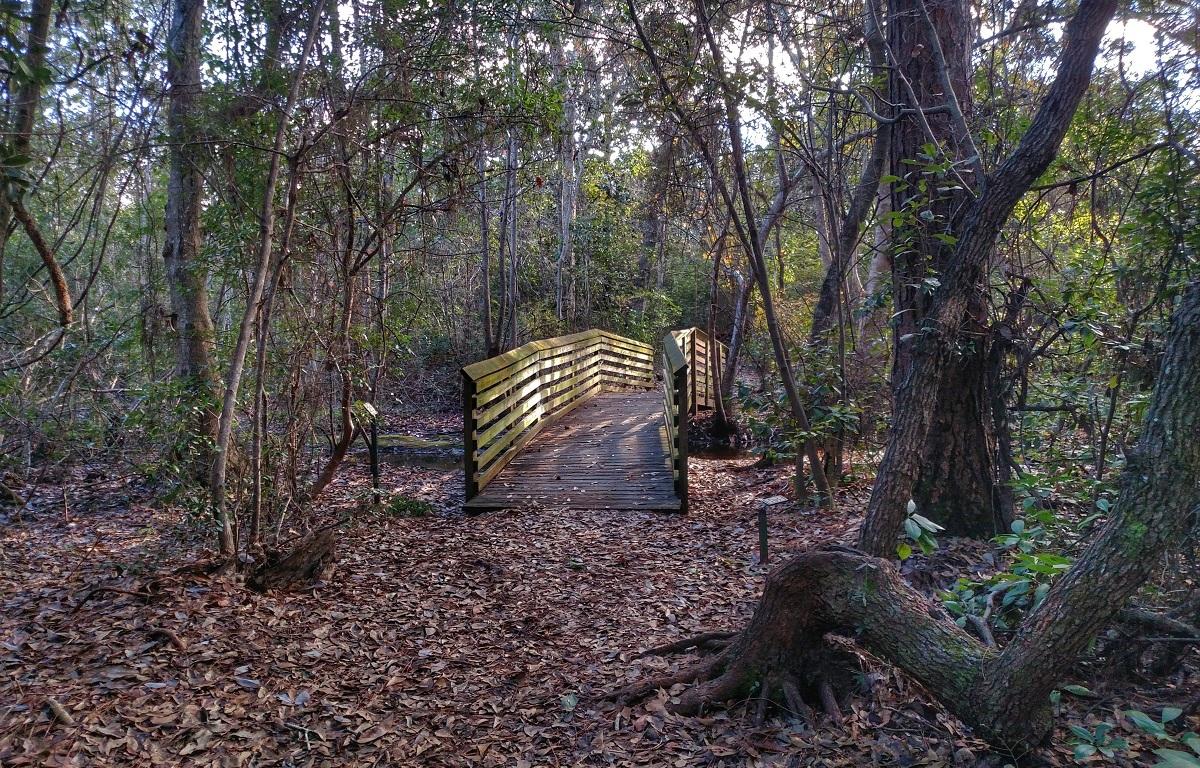 oak tree nature park, florida, nature