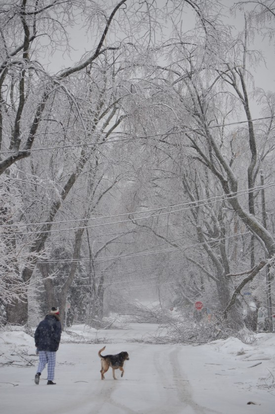 ice storm, winter, nature, canada