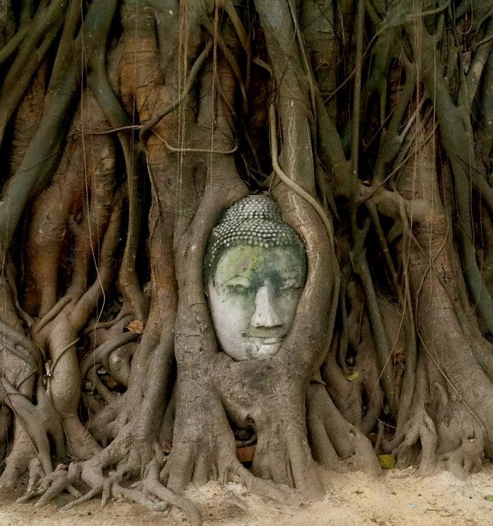 buddha, india, travel