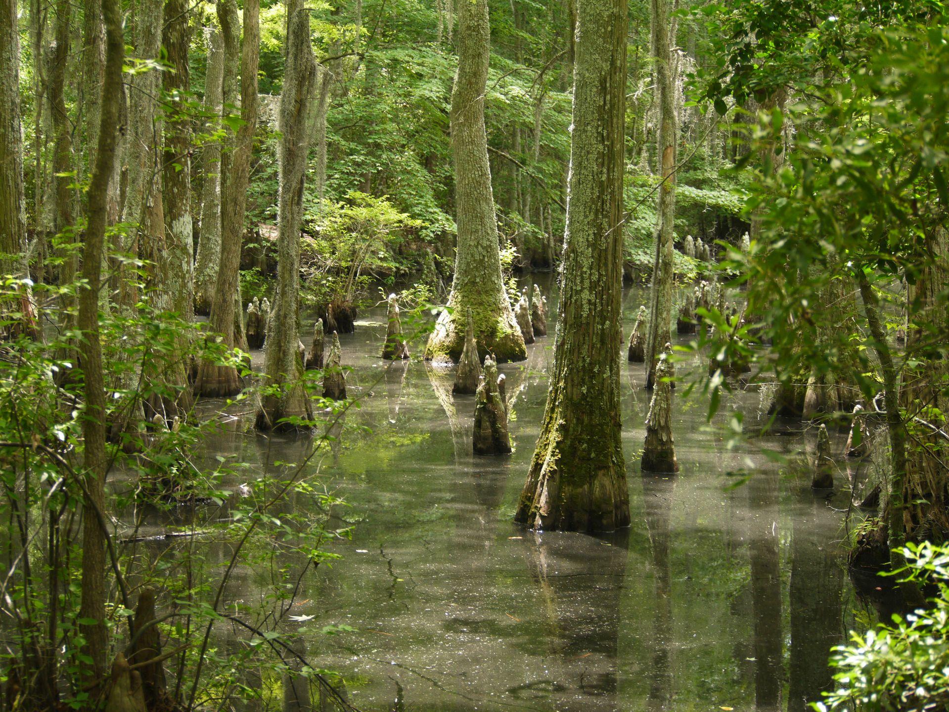 swamp, virginia, state park