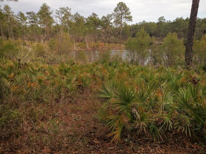 florida scenic trail, hiking, nature