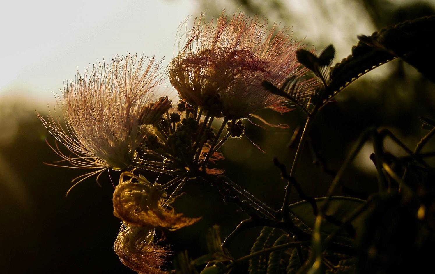 blossoms, nature, virginia