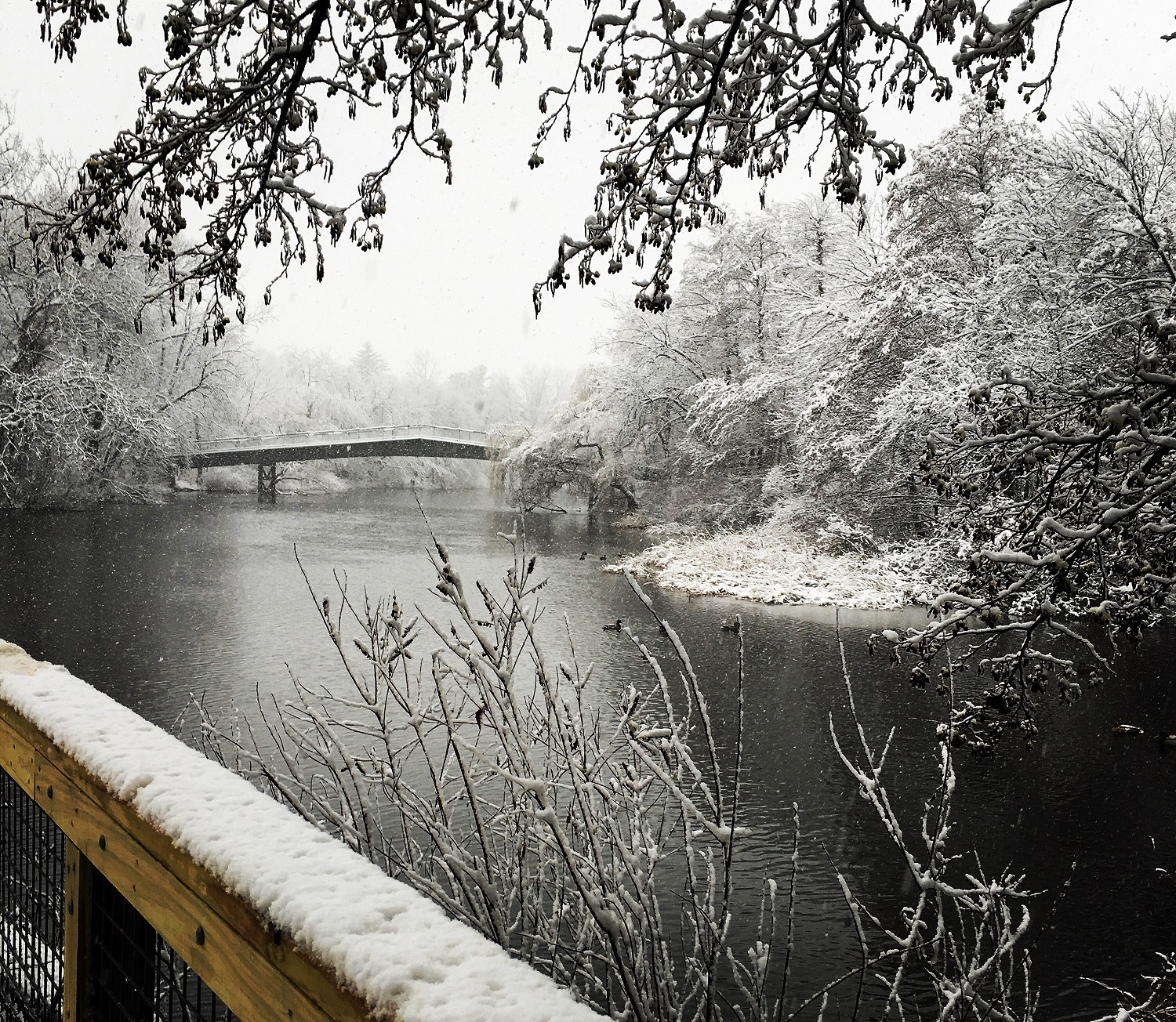 winter, bridge, blizzard