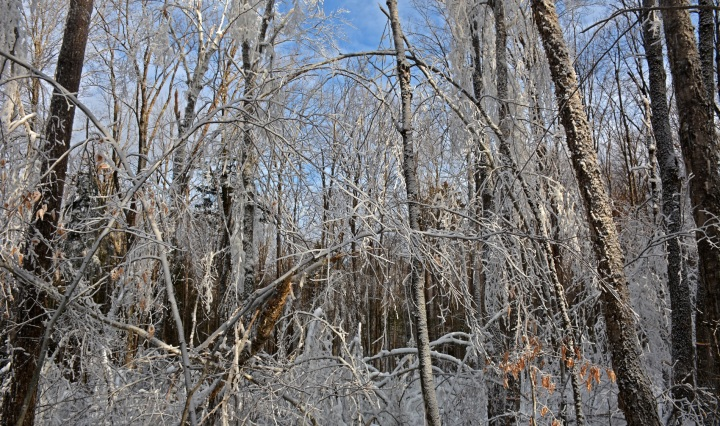 ice storm, hubbard brook, new hampshire, nature, science