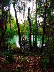 springs, florida, three sisters, nature