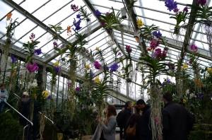 royal botanic gardens, london, flowers, nature