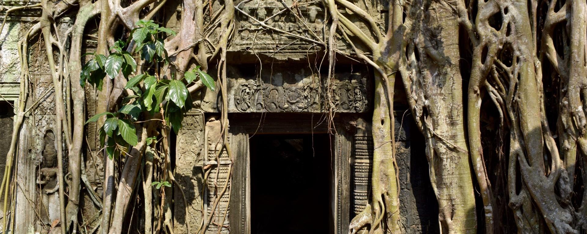 cambodia, temple, nature, travel