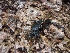 Galapagos, travel, nature, crab