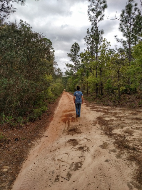 nature, hiking, eglin, air force, florida
