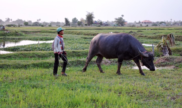 nature, landscape, travel, cambodia, atv