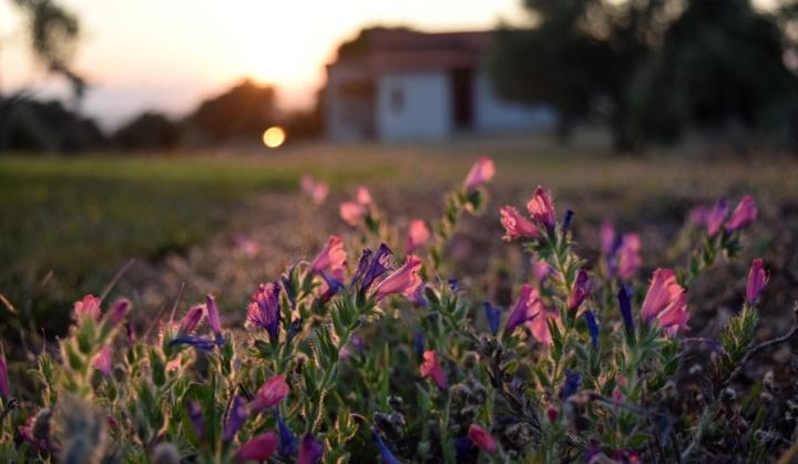 flowers, nature, greece, travel