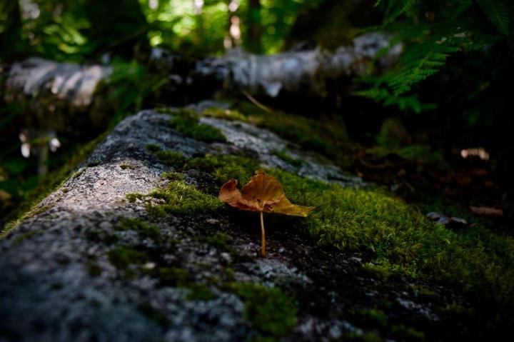 hiking, nature, landscape