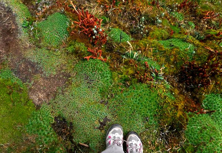 nature, highlands, ecuador