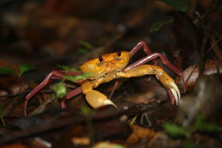 nature, travel, crab, madagascar