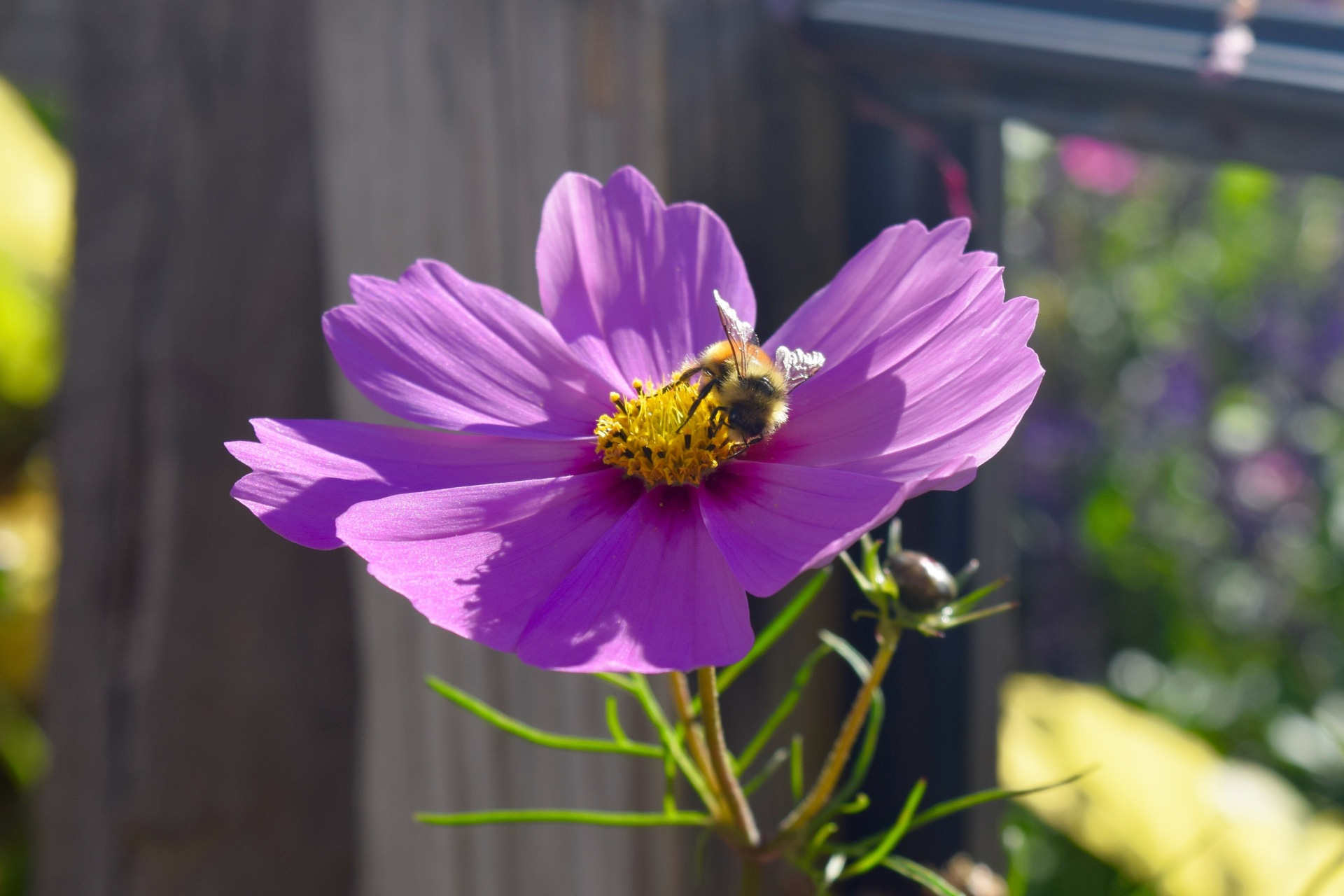 flower, bee, nature