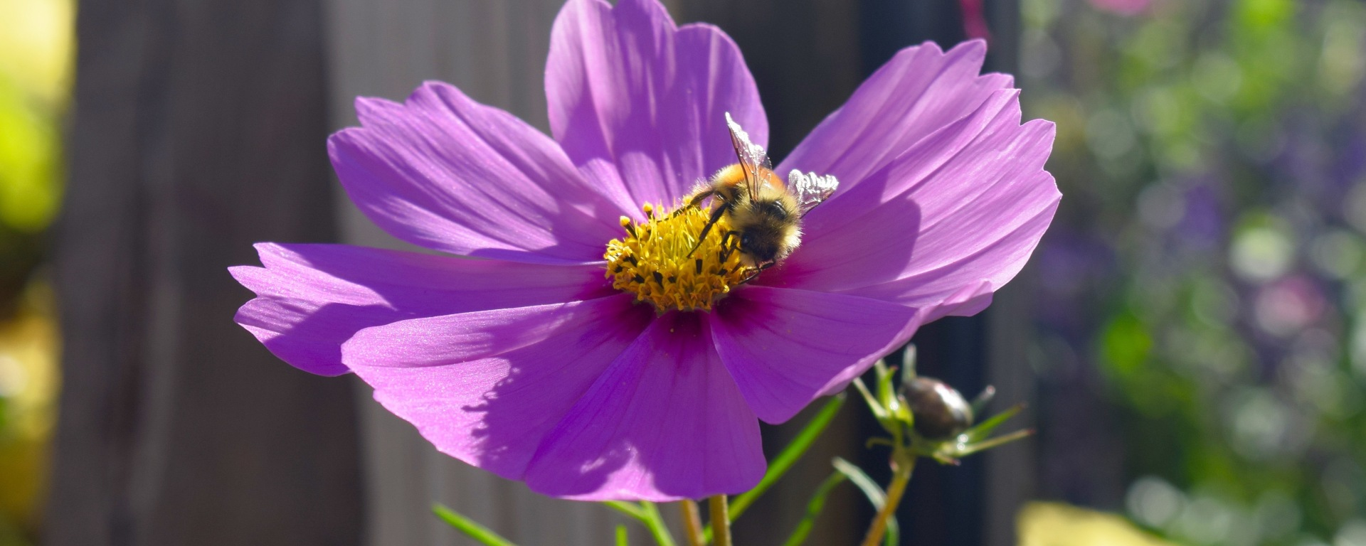 flower, bee, nature
