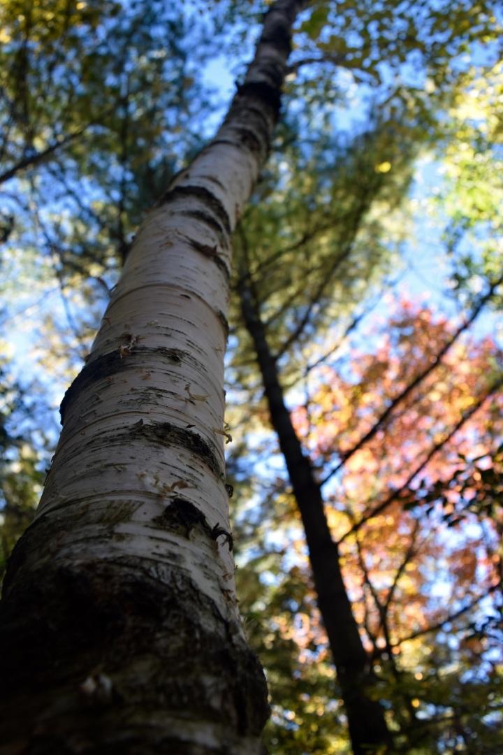 maine, fall, autumn, nature