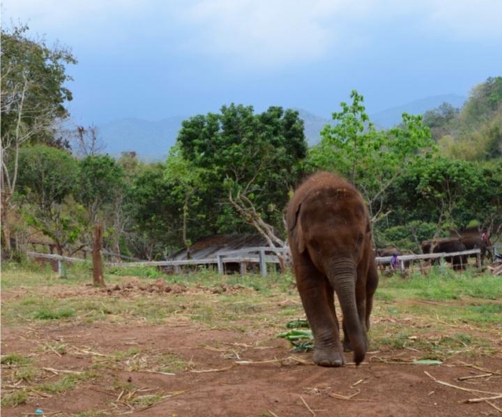 elephant, baby, nature