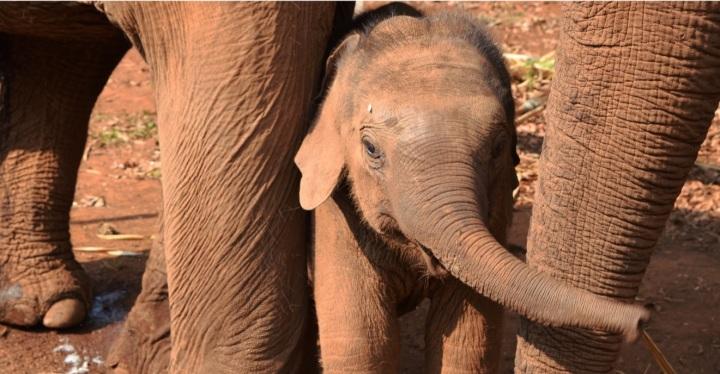elephant, nature, landscape