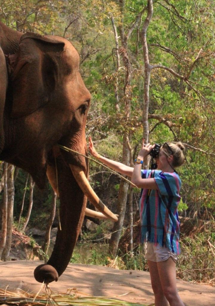nature, landscape, elephant, photography