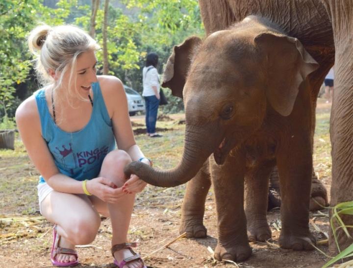 elephant, nature