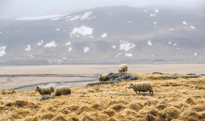 iceland, nature, travel