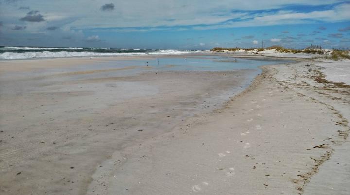 okaloosa island, florida, beach, nature, hermine